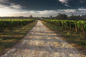 vignobles de gascogne